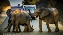 Elephants, Kruger National Park, South Africa